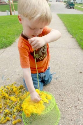 Fine motor threading using dandelions picked