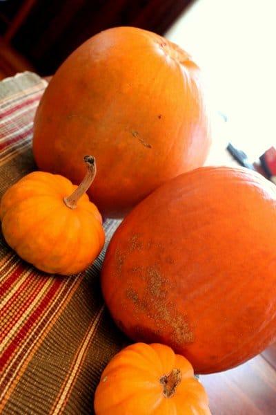 Pumpkins to make a family of pumpkin mummies