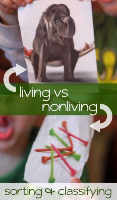 Sort pictures of living and nonliving things
