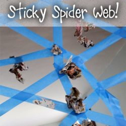 Sticky Spider Web Activity