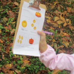 Pumpkin Patch Learning