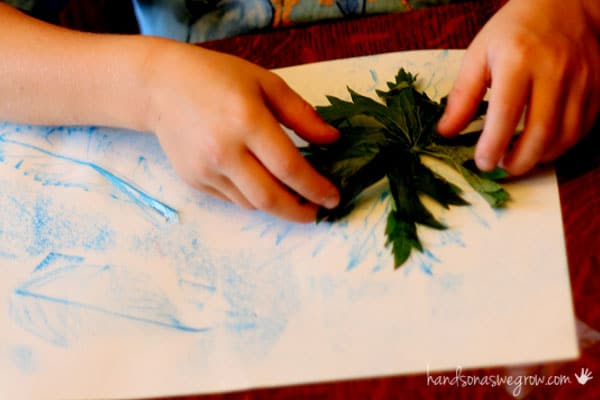 Match leaf rubbings with the leaves