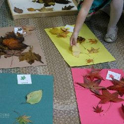 Fall Leaf Sorting- Teaching 2 and 3 Year Olds