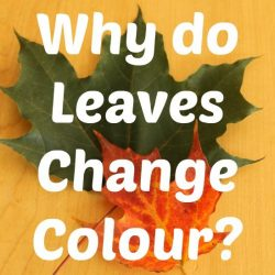 Why Leaves Change Color- How Wee Learn