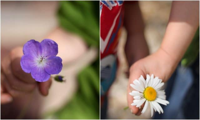 Try counting flower petals for a fun outside math activity!