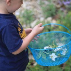 Nature Scavenger Hunt for Young Kids