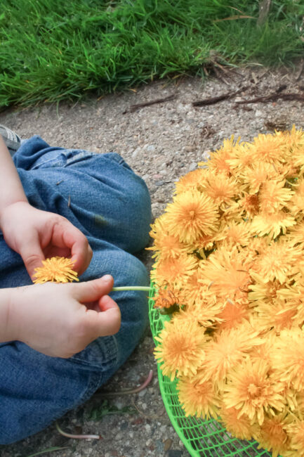 Picking dandelions and threading them into a basket. Outdoor play