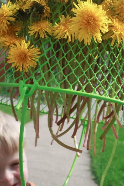 Dandelion threading activity for preschoolers