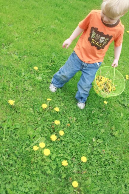 A super fun dandelion activity challenge to also get them out of your yard.