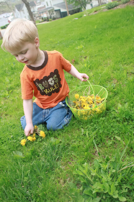 Filling a basket with as many dandelions as we can.