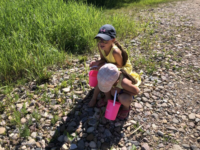 Going on a nature hunt to collect rocks for crafts and activities.