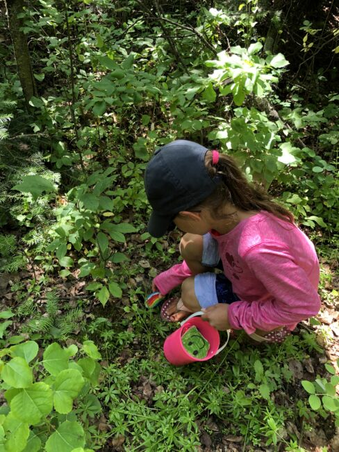 Kids hiding the nature collection colored rocks for others to find.