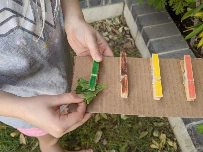 Color Practice Fine Motor Clothespin Clip Scavenger Hunt with Nature
