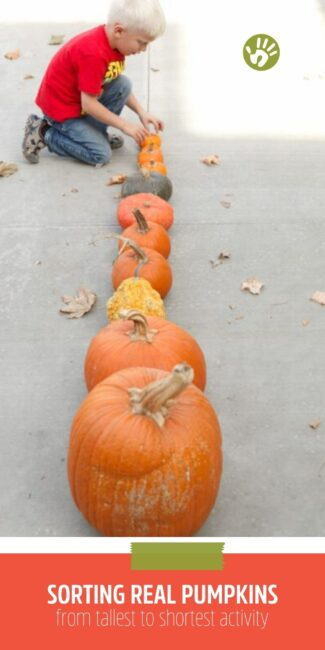 Have fun with all your beautiful fall pumpkins sorting and lining them up! Your kids will love figuring out the tallest to the shortest!